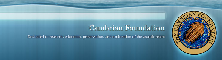 Cambrian Foundation